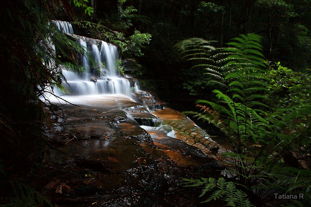 Enchanted Rainforest by Tatiana R