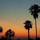 Palm Sunset by SpiritFox