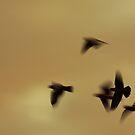 Freedom by Gareth Bowell
