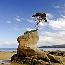 Beached Tree by llemmacs