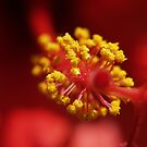Yellow On Red by BobJohnson