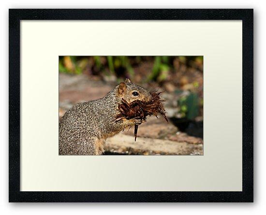 Mulch Thief by Bonnie T.  Barry