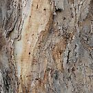 Tree close-up by Joan Wild