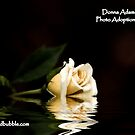 Photo Adoption Agency  by Donna Adamski