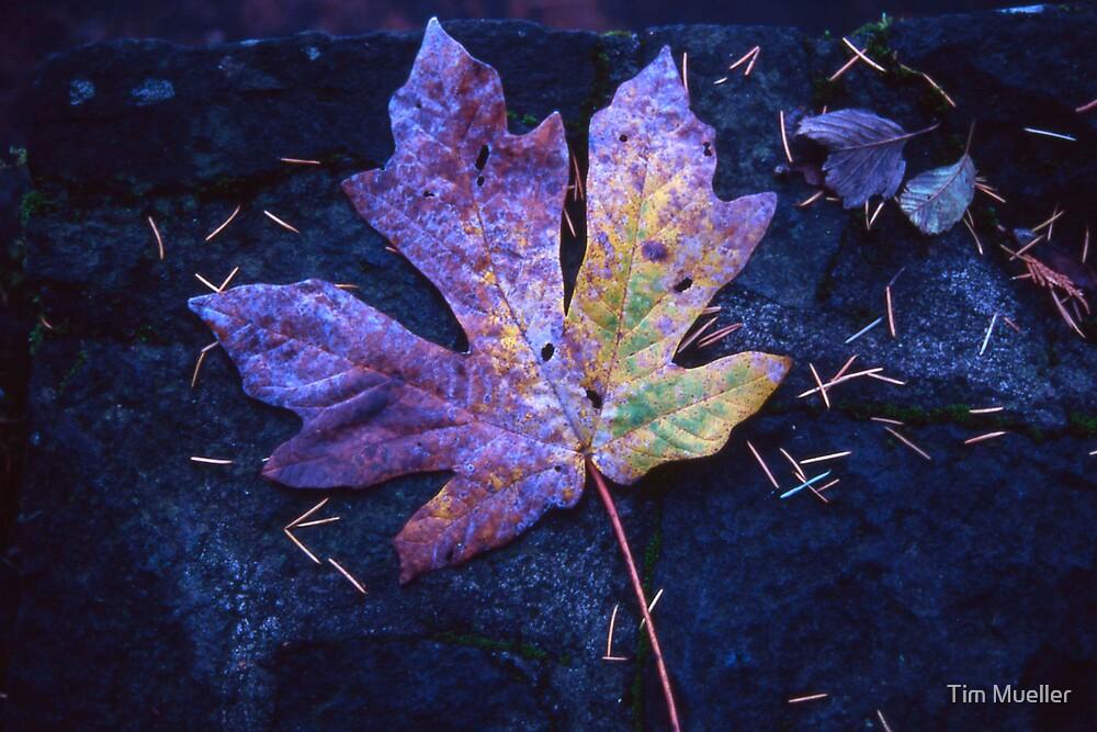 Leaf by Tim Mueller