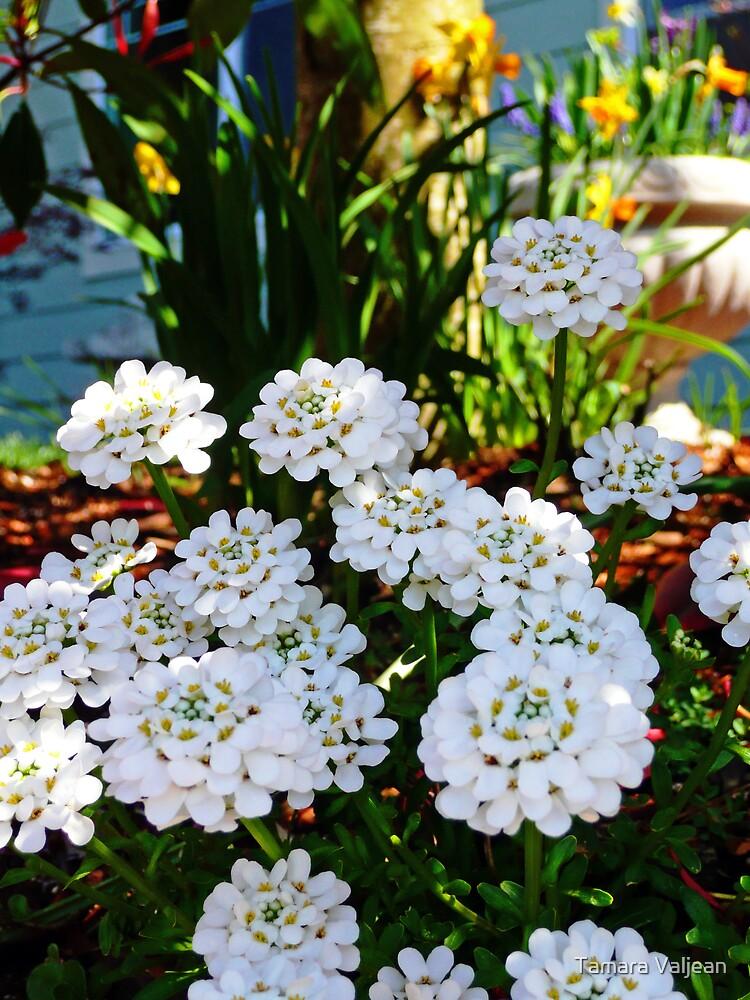 Spring Still Life by Tamara Valjean