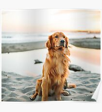 dog look  iPhone cases! beautiful product for dogs  and pets lovers Poster