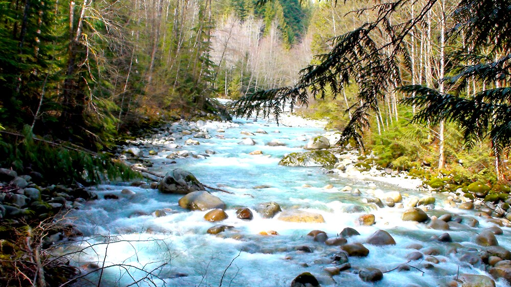 springtime at lynn valley by Christopher R Pitts