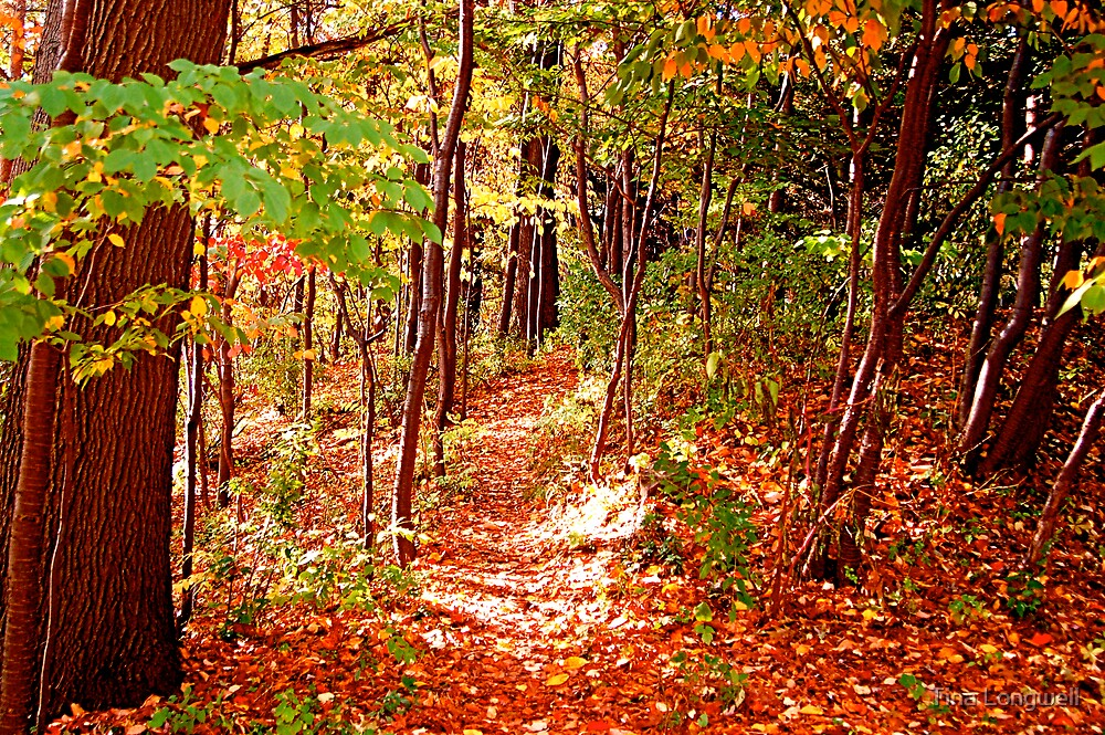A Walk Through Autumn by Tina Longwell