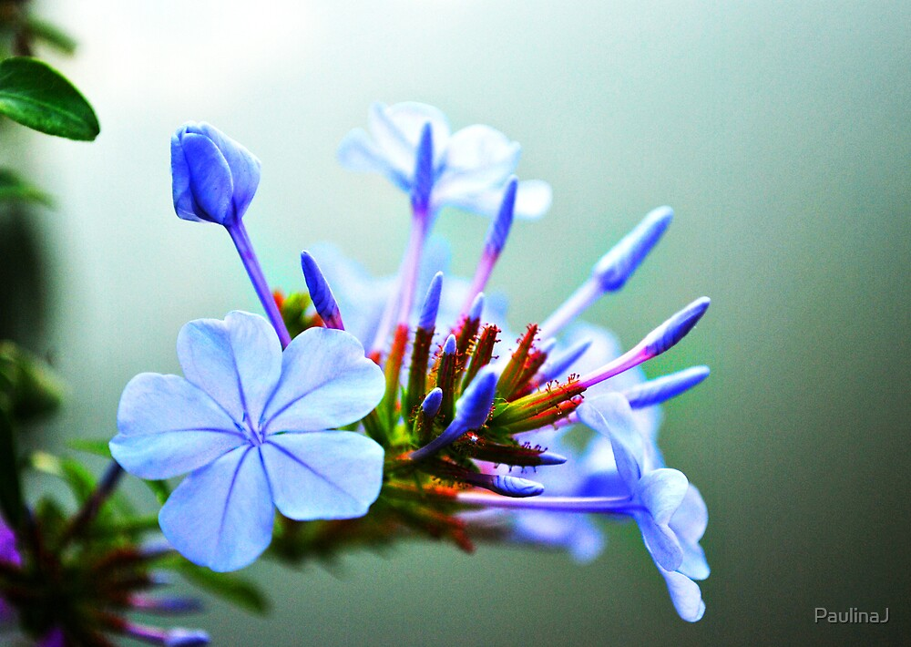 Blue Dreams by PaulinaJ