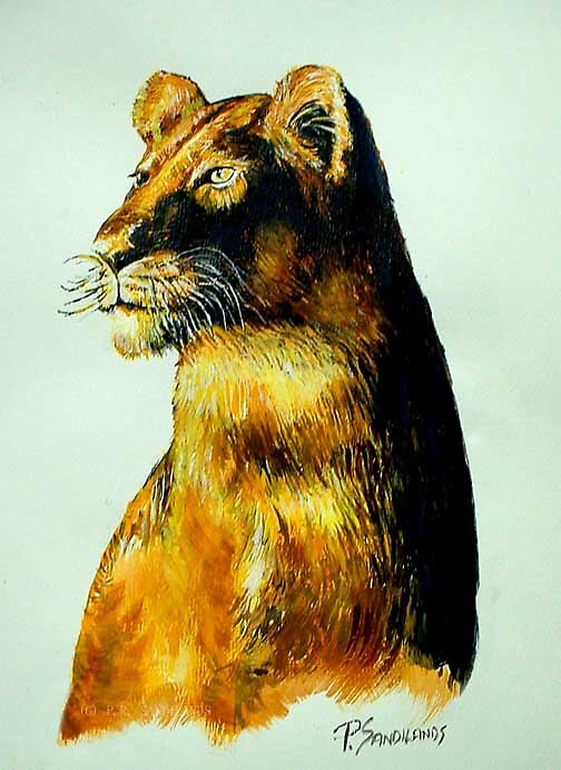 lioness by bronteart
