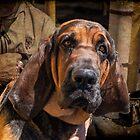 Bloodhound by barkeypf