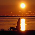 Sunrise VIII (Lakeshore)...! by sendao