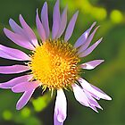 Parry's Leafy Aster by John Butler
