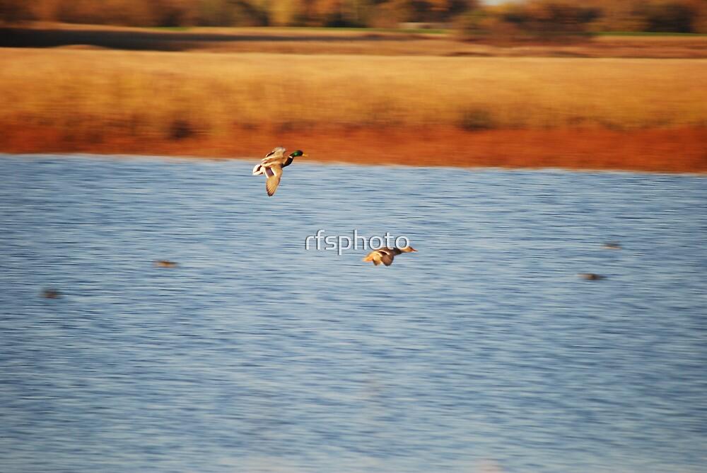In Flight by rfsphoto