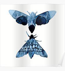 Death Head Hawk Moth Full Skull Poster