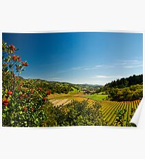 Springtime in the Napa Valley, California Poster