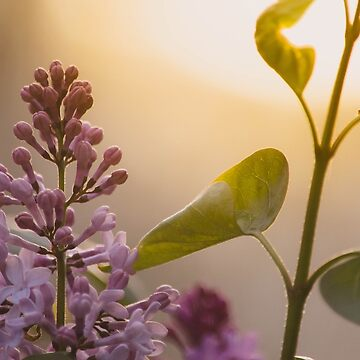 Spring Light by lindsayosborne