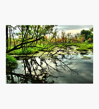 Tree Reflexion Photographic Print
