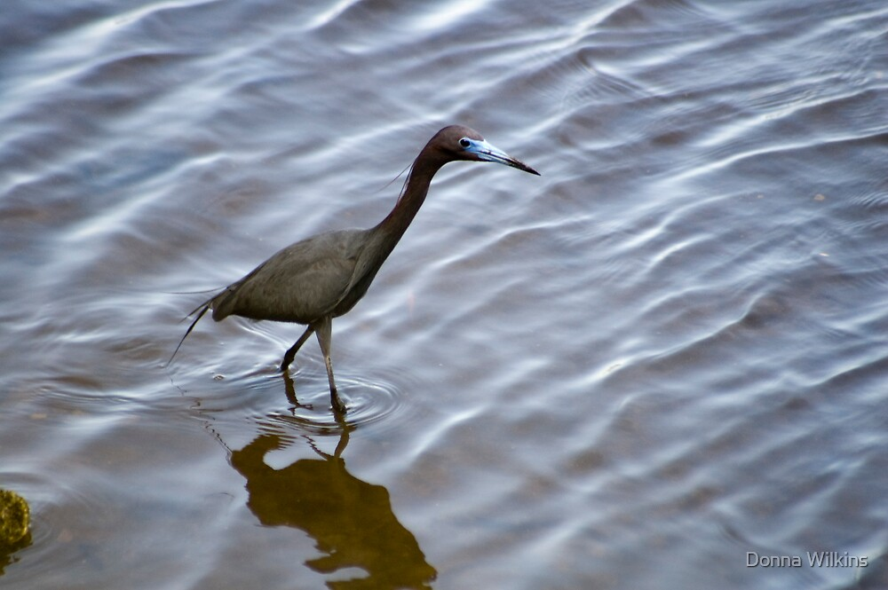 Wading by Donna Wilkins