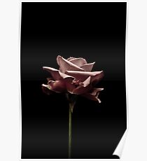 Pink roze Poster