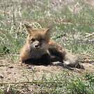There goes the neighborhood (baby foxes) 04 by janetmarston