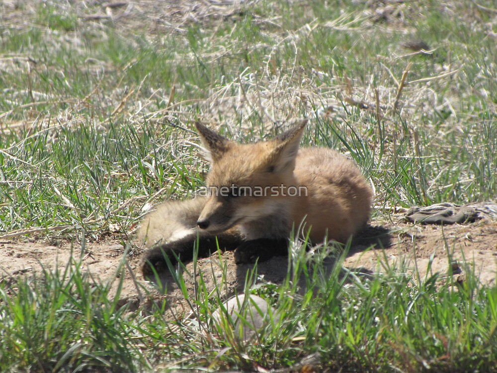 There goes the neighborhood (baby foxes) 05 by janetmarston