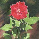 Mother's Day Rose Card by jmgreenartworks