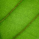 Leaf by ingridrob