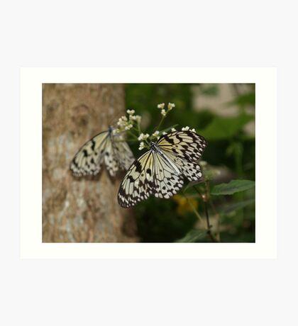 Mirror? ---Paperkite Butterfly Art Print