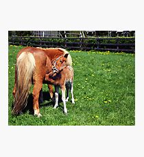 Mare feeding her foal Photographic Print