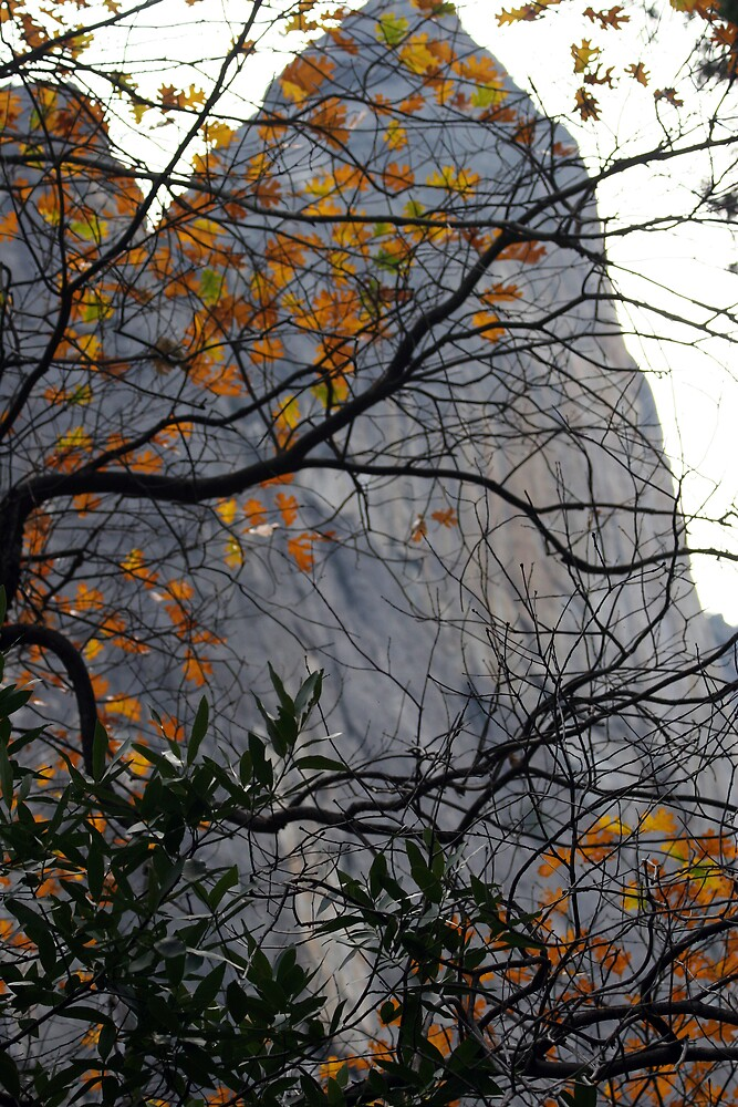 Through the Leaves by Kathy Pantel