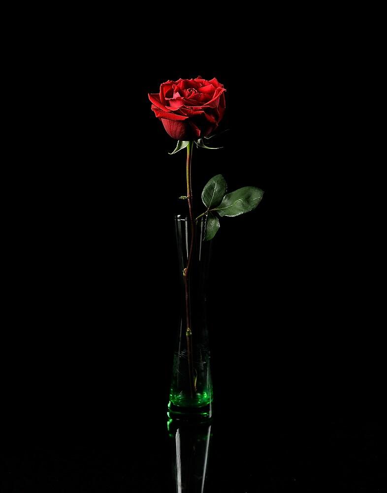 Rosa Indica by George DeLoache