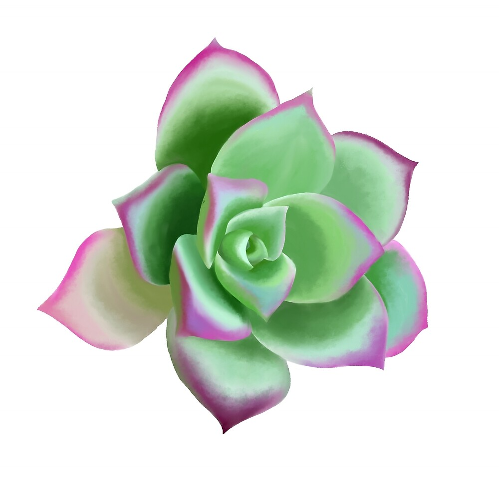 Succulent - cactus print by Hollyroseart