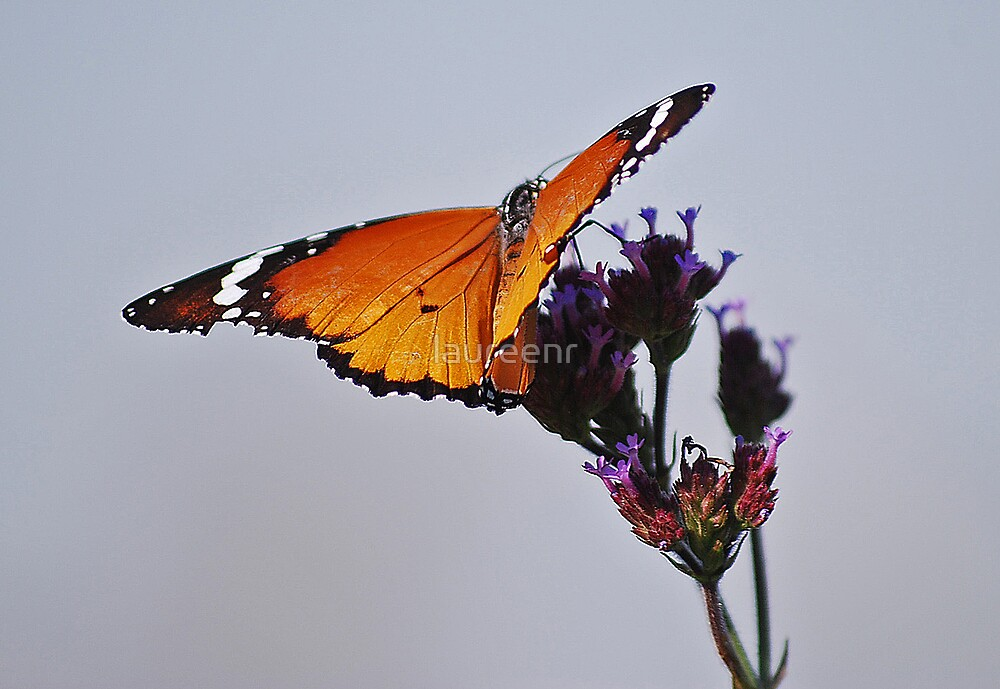 Butterfly touch by laureenr