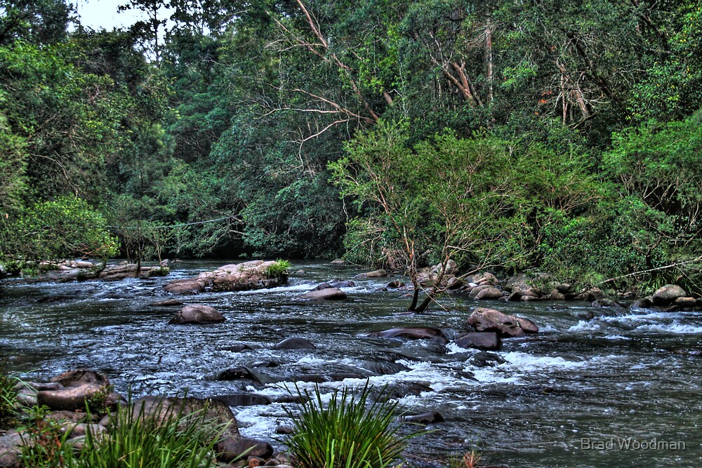 Williams River 2 by Brad Woodman