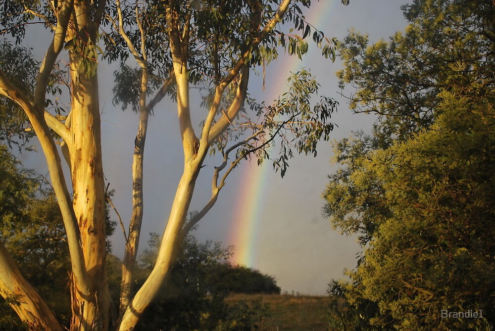 Over the Rainbow by Brandie1