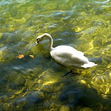 White Swan at Lake Lugano by GVAZDesigns