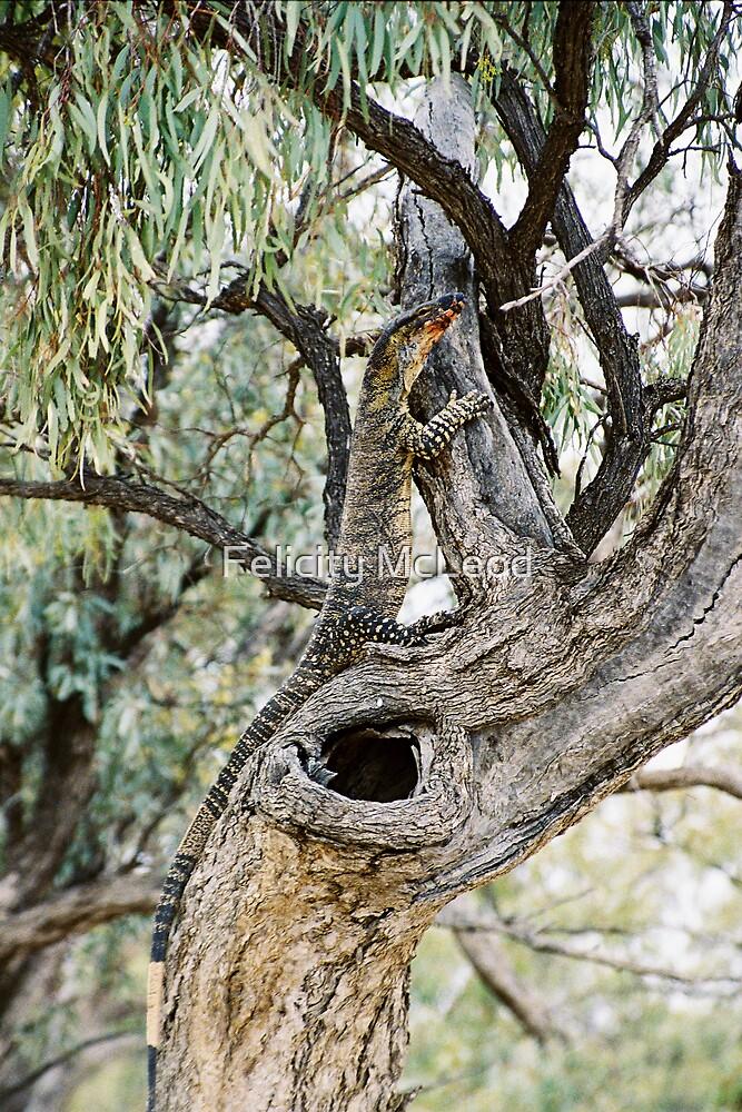 Tree Hugger by Felicity McLeod