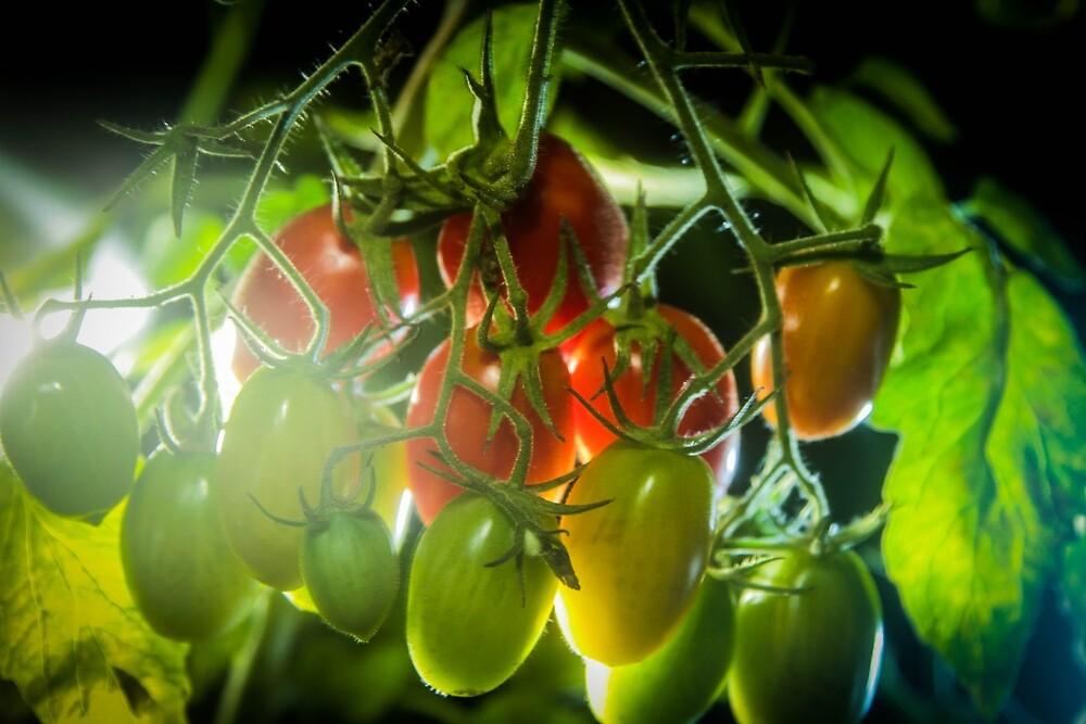 Nightime Tomatoes by jongagnon
