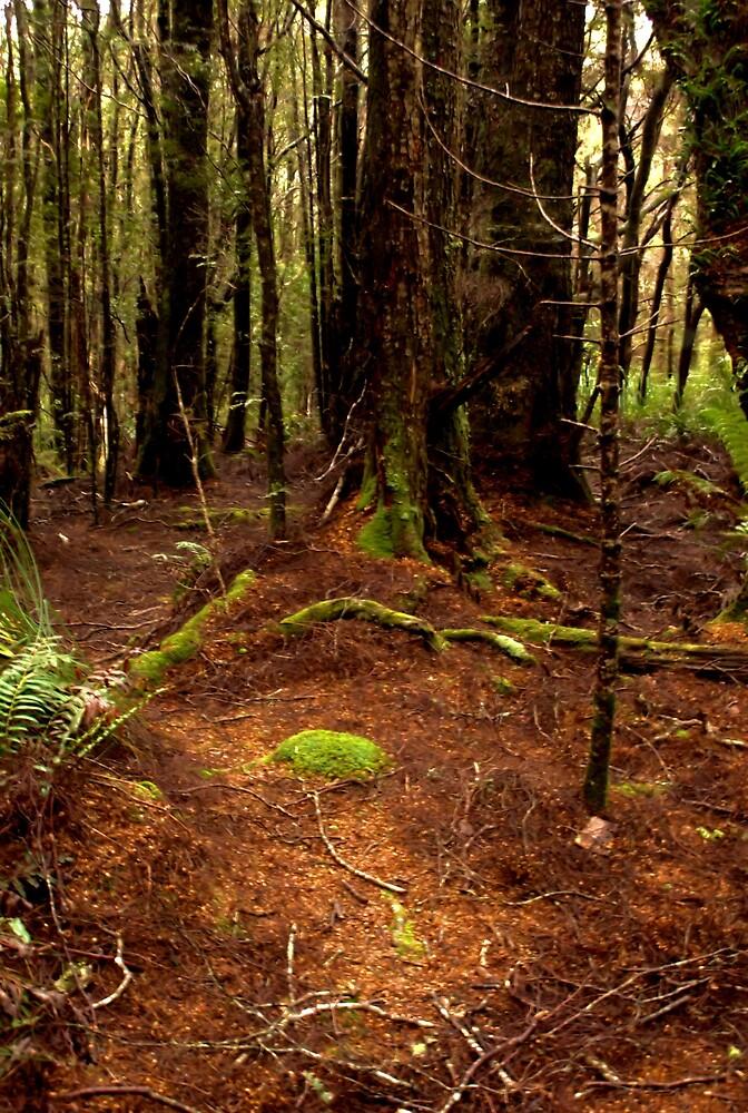 St Columbus Falls rainforest tasmania by paulrobbo