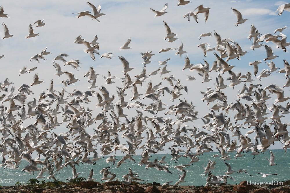 Omiru Gulls by UniversalOm