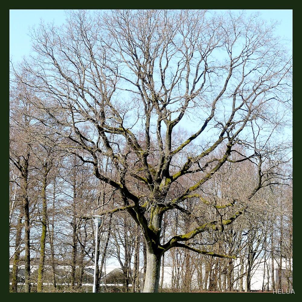 Oak In Springtime by HELUA