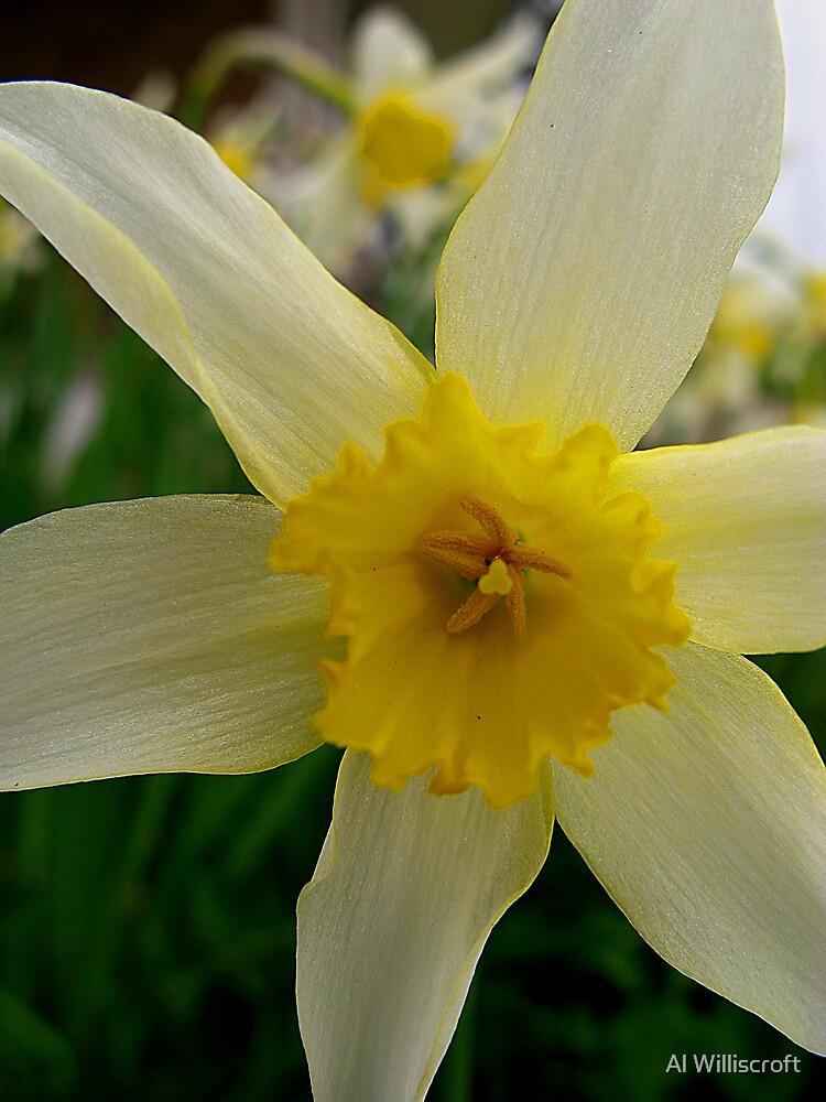Spring by Al Williscroft