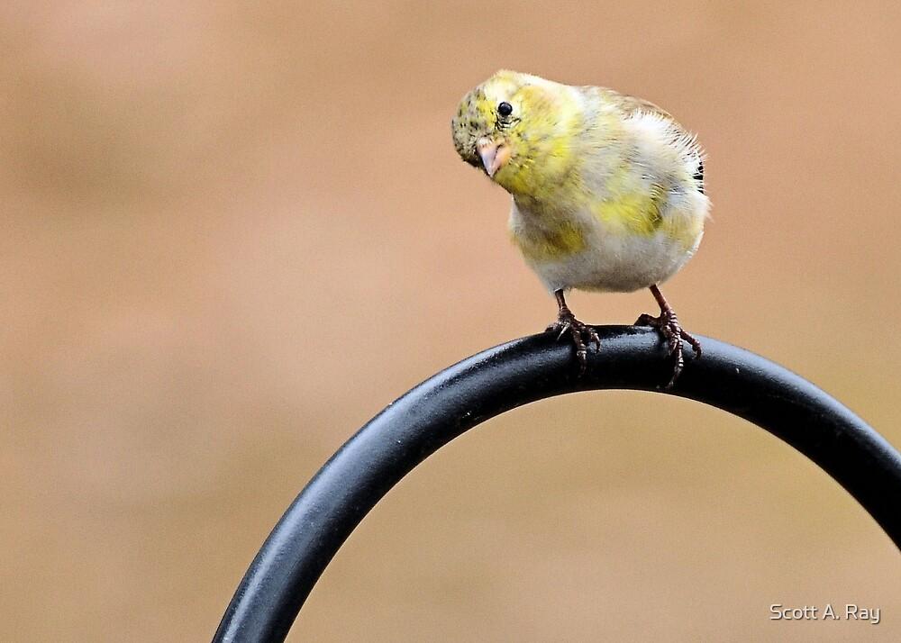 Bird by Scott A. Ray