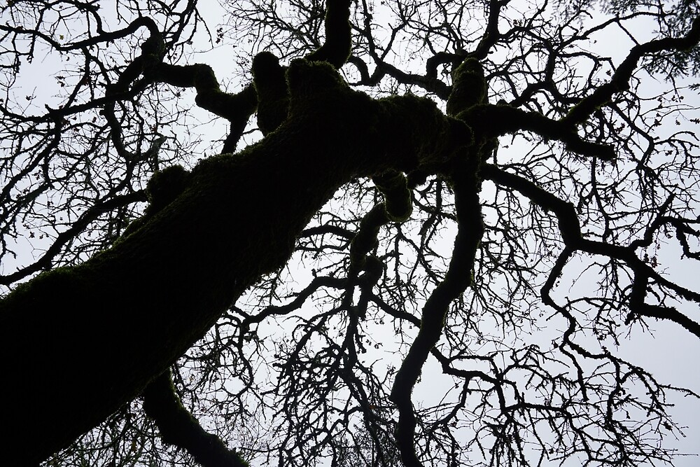Moss Tree by hominid-talia