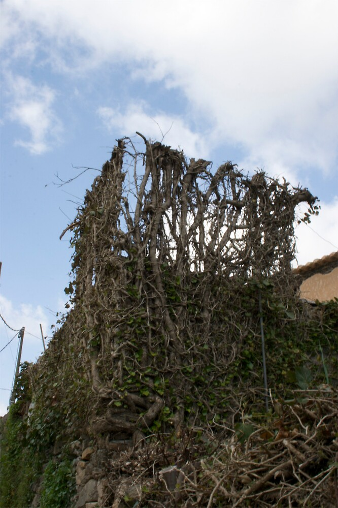 Ivy Wall by ElisaAnedda