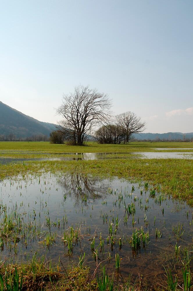 Wetlands Near Planina by jojobob