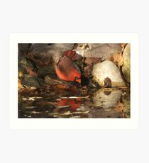 A Red Reflection. Art Print