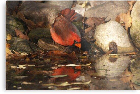 A Red Reflection. by DigitallyStill